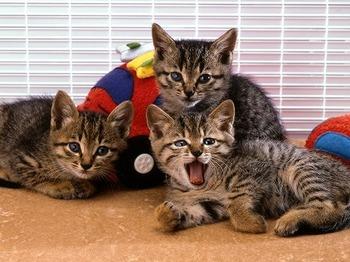 cat0046-026.jpg